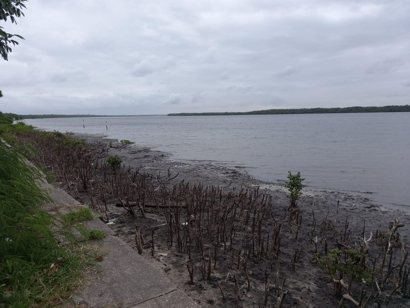 vegetação do mangue na priaa do Jacaré é cortada sem autorização